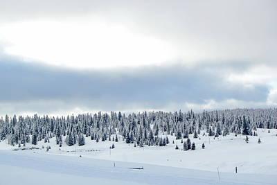 Photograph - Fir Tree In Winter, Jura Mountain, Switzerland by Elenarts - Elena Duvernay photo