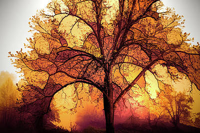 Photograph - Fire In The Trees by Debra and Dave Vanderlaan