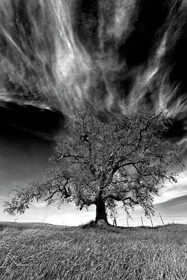 Photograph - Fire Tree No.1 in Monochrome by Terrance Emerson