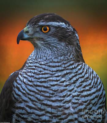 Chicken Portrait Wall Art - Photograph - Firebird by Mitch Shindelbower