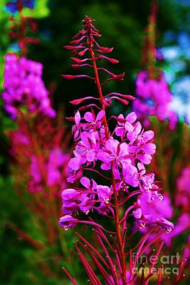 Abstract Stripe Patterns Rights Managed Images - Fireweed Royalty-Free Image by Donna Cain
