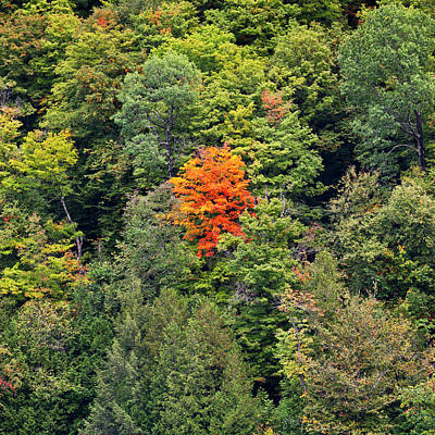 Photograph - First Autumn Color by Alan L Graham