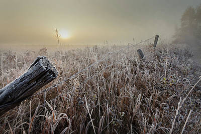 Photograph - First Frost by Dan Jurak