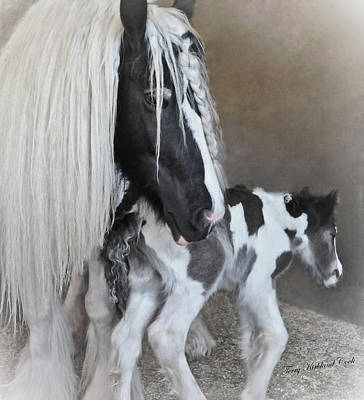 Gypsy Vanner Horse Photograph - First Moments by Terry Kirkland Cook
