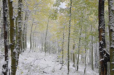 Photograph - First Snow Fall by Matt Helm