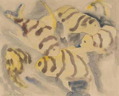 Drawing - Fish Series, No. 3 by Charles Demuth