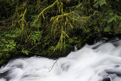 Photograph - Fishhawk Creek by Robert Potts