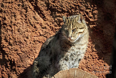 Photograph - Fishing Cat by Richard Smith