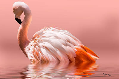 Lenz Wall Art - Photograph - Flamingo-2010 by George Lenz