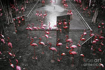 Art Print featuring the photograph Flamingo by Setsiri Silapasuwanchai