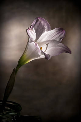 Photograph - Flashlight Series White Flower 6 by Lou  Novick