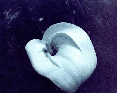 Flavel Lily Art Print by Jennifer Ott