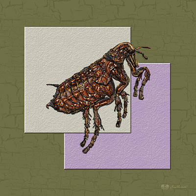 Animals Photograph - Flea On Abstract Beige Lavender And Dark Khaki by Serge Averbukh