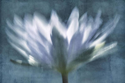 Photograph - Fleeting Fantasy Blue Tone by Leda Robertson