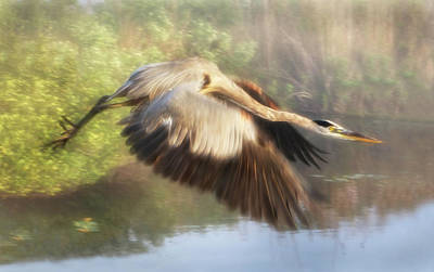 Photograph - Flight by Louise Lindsay
