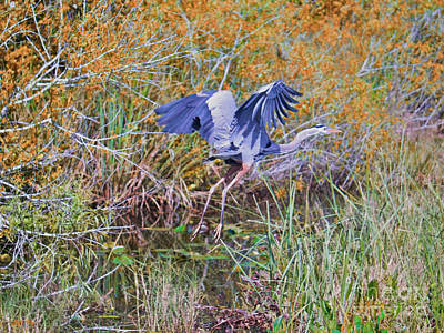 Painting - Flight Of The Heron by Judy Kay