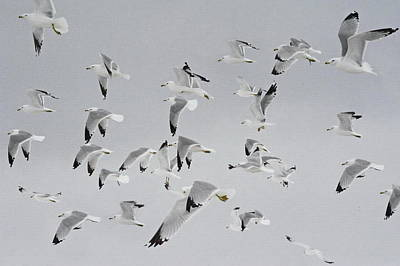 Photograph - Flock Of Birds  by Andrea Kollo