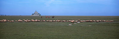 Flock Of Sheep Photograph - Flock Of Sheep Grazing In A Field by Panoramic Images