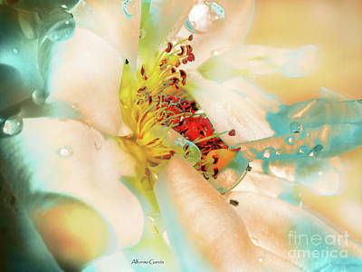 Photograph - Flor by Alfonso Garcia