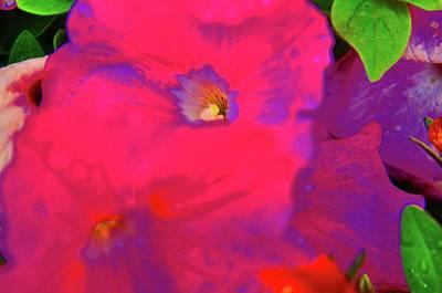 Photograph - Floral Beauty by Joe Burns