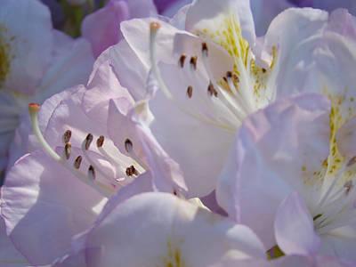 Floral Pastel Art Prints Nature Rhodies Rhodendrons Baslee Troutman Art Print by Baslee Troutman