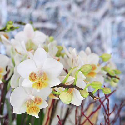 Photograph - Florals No. 5 by Steve Tobus