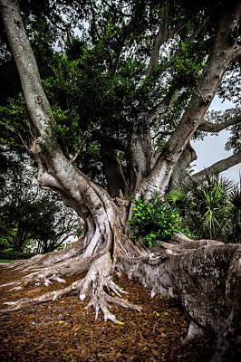 Landscape Photos Chad Dutson - FLorida Banyan by Michael Frizzell
