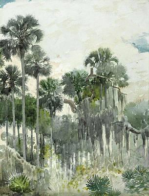 Winslow Homer Drawing - Florida Jungle by Winslow Homer