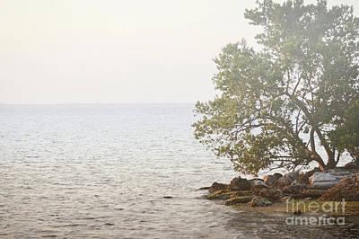 Photograph - Florida Ocean Sunset Tree Landscape by Andrea Hazel Ihlefeld