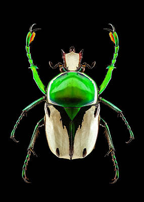 Photograph - Flower Chafer Beetle by Gary Shepard