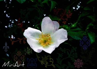 Art Print featuring the photograph Flower Deco by Miriam Shaw