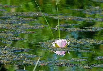 Photograph - Flower by Gina Levesque