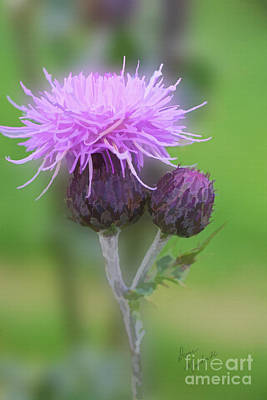 Photograph - Flower Of Scotland by Diane Macdonald