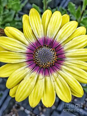 Photograph - Flower Power by Tony Baca