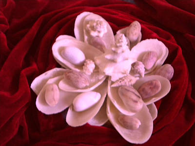 Photograph - Flower Shell by Arlin Jules