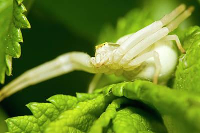 Photograph - Flower Spider by Jouko Mikkola