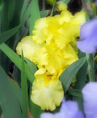 Photograph - Flowering Forth by Deborah  Crew-Johnson