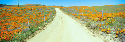 Flowers & Poppies, Antelope Valley Print by Panoramic Images