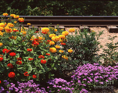 Photograph - Flowers By Train Tracks by John Bowers