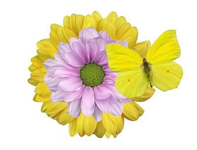Photograph - Flowers-gerbera  by Manfred Lutzius