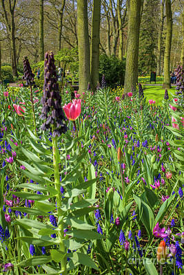 Photograph - Flowers In All Colors by Patricia Hofmeester