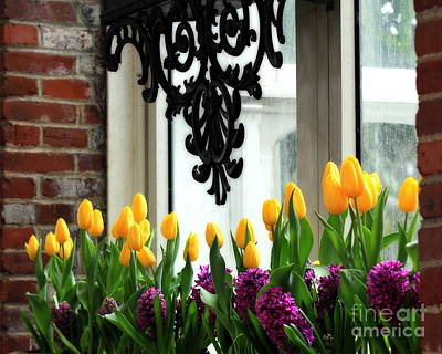 Granger - Flowers in Window Boxes by Angela Rath