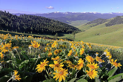 Photograph - Spring In The Mountains by Jack Bell
