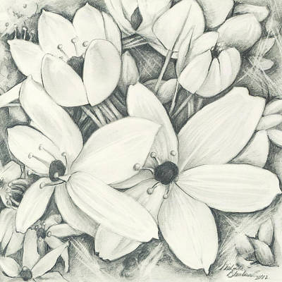 Drawing - Flowers Pencil by Melinda Blackman