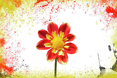 Photograph - Flowers  by Roman Gomez