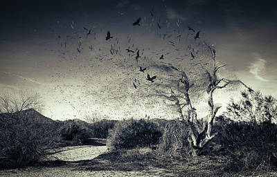 Photograph - Fly Away  by Sandra Parlow