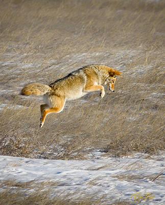 Photograph - Flying Coyote by Rikk Flohr