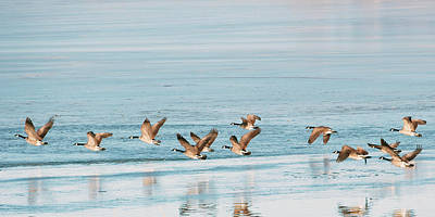 Photograph - Flying Geese by Catherine Lau