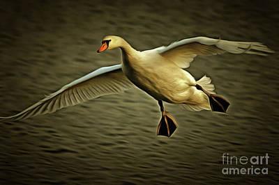 Flying Swan Art Print