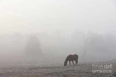Photograph - Foggy Grazing by Jennifer White